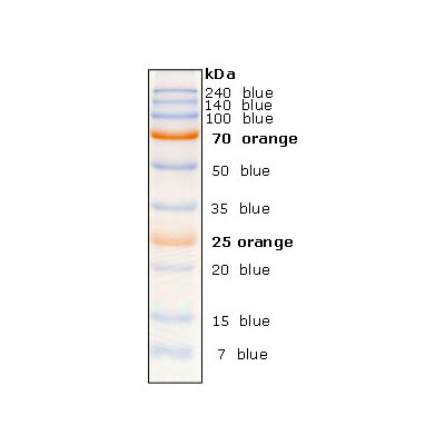 Broad range Prestained Protein Marker(dual color)