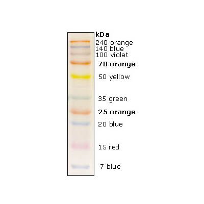 Broad range Prestained Protein Marker(multi-color)