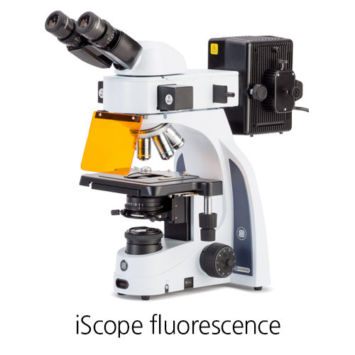 [iScope fluorescence] LIFE SCIENCE Fluorescence microscopes 형광 현미경